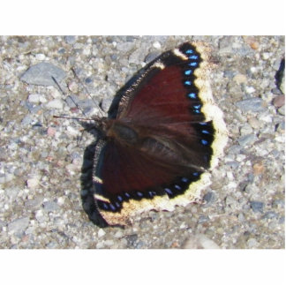 Mourning Cloak Cutout Magnet
