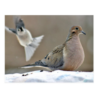 Mourning dove and tufted titmouse postcard