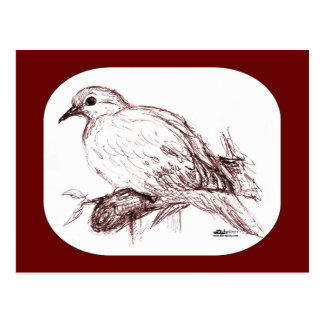 Mourning Dove Baby Postcard