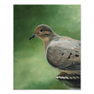 Mourning Dove Bird Art Print
