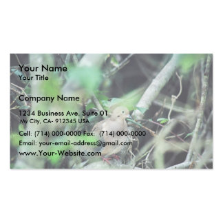 Mourning Dove Business Card