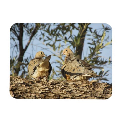 Mourning Dove Couple Magnet