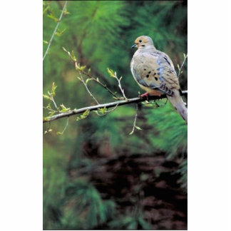 Mourning dove cutout