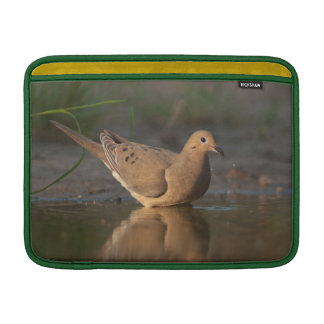 Mourning Dove drinking in South Texas reflection MacBook Sleeves