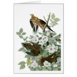 Mourning Dove, John James Audubon Cards
