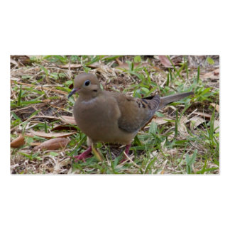 Mourning Dove or Turtle Dove on the Ground Business Card Template