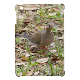 Mourning Dove or Turtle Dove on the Ground Cover For The iPad Mini