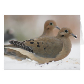 Mourning dove photography card