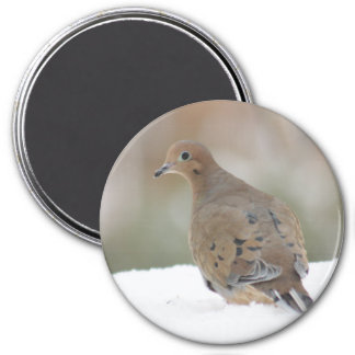 Mourning dove photography magnet