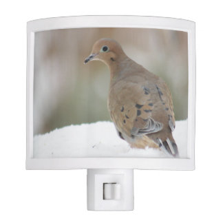 Mourning dove photography night light