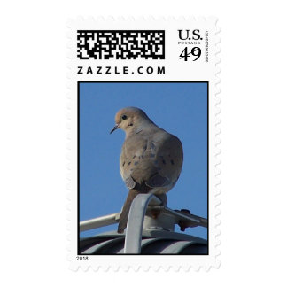 Mourning Dove Postage Stamp