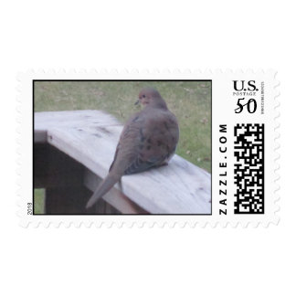 Mourning Dove Postage Stamps