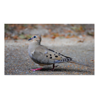 Mourning Dove Taking a Walk Business Card