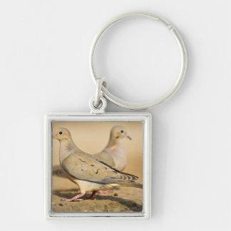 Mourning Dove (Zenaida macroura) adults on Keychain