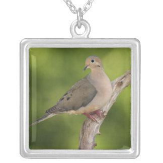 Mourning Dove, Zenaida macroura Custom Necklace