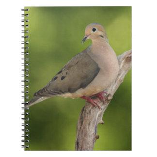Mourning Dove, Zenaida macroura Notebook