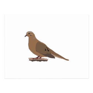Mourning, Love or Turtle Dove Digitally Drawn Bird Postcard