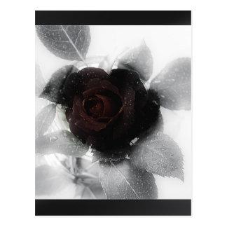 Mourning Memory Rose Postcard
