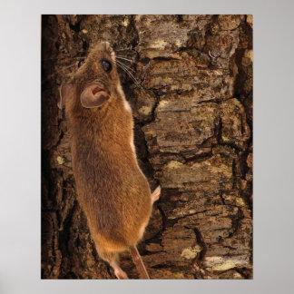 Mouse Climbing Tree Print