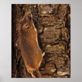 Mouse Climbing Tree