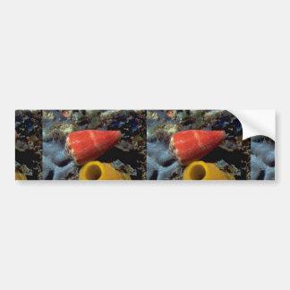 Mouse cone (Conus mus) Shell Bumper Stickers