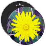 Mouse Ear Hawkweed Button