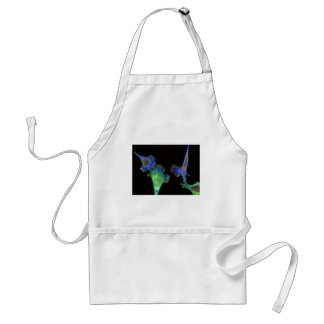 Mouse embryonic fibroblasts adult apron