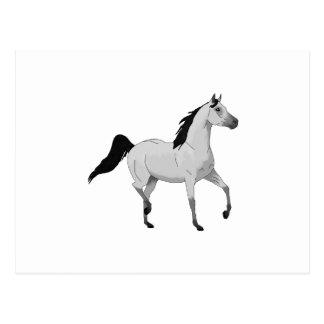 Mouse Grey Arabian Horse Trotting and Prancing Postcard