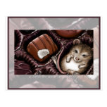 Mouse in the Chocolate Box Post Card