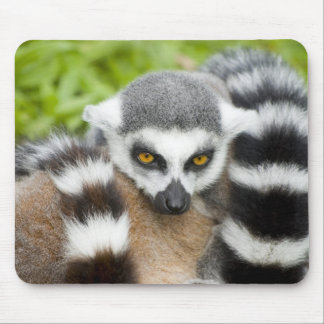 Mouse Mat - Cute Lemur Stripey Tail