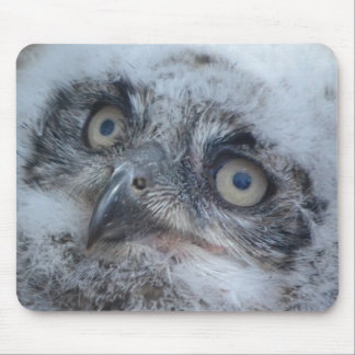Mouse Pad  -  Baby Owl