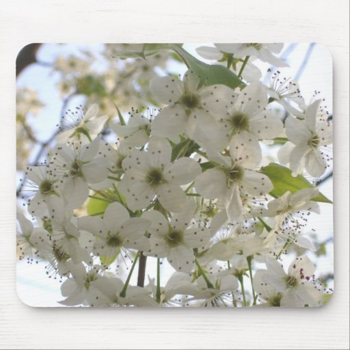 Mouse Pad - Blooming Bradford Pear