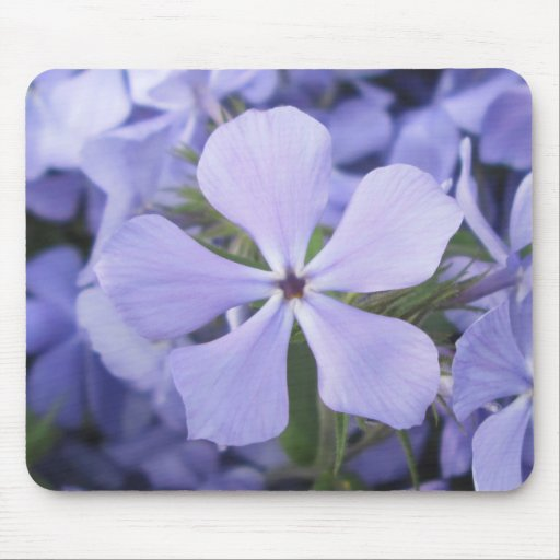Mouse Pad - Blue Phlox II