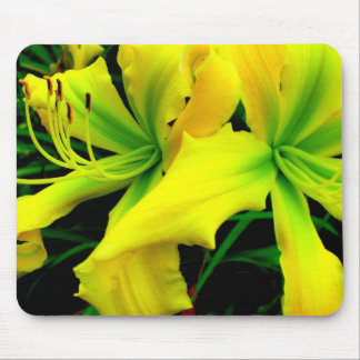 Mouse Pad: Daylily Mouse Pad