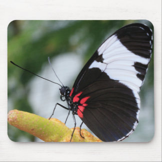 Mouse Pad/Doris Longwing Butterfly Mouse Pad