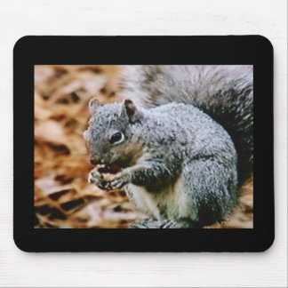 MOUSE PAD - HUNGRY SQUIRREL