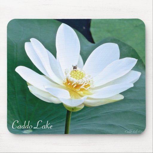Mouse Pad - Lily & Bee