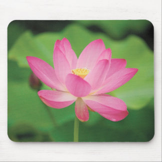 Mouse pad of flower of lotus, No.03