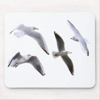 Mouse pad of gull, No.01