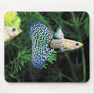 Mouse pad of guppy, No.02