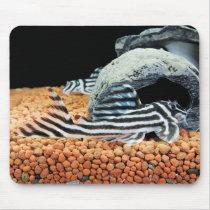 Mouse pad of imperial zebra pureko, No.01
