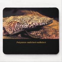 Mouse pad of poriputerusu endorikeri & endorikeri