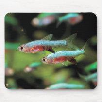Mouse pad of rasubora akuserurotsudei blue