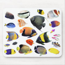 Mouse pad of seawater fish of tropical region