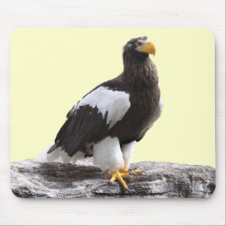 Mouse pad of steller's sea eagle, No.03
