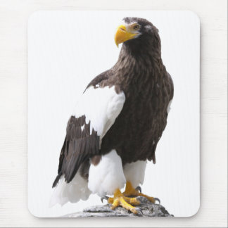 Mouse pad of steller's sea eagle, No.04