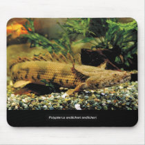 Mouse pad of the young fish of Polypterus Endliche