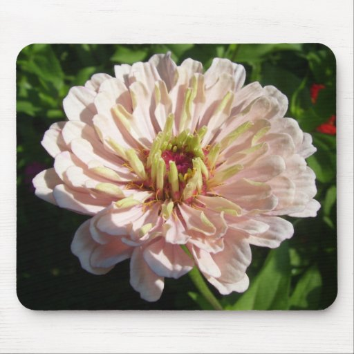 Mouse Pad - Palest Pink Zinnia