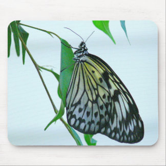 Mouse Pad, Photography, Butterfly Mouse Pad