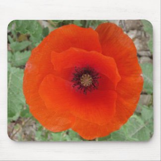 Mouse Pad. Poppy (Poppy) Mouse Pad
